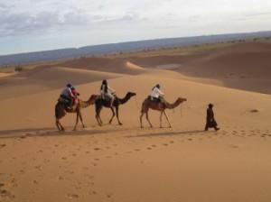 Camel Trekking in Morocco desert