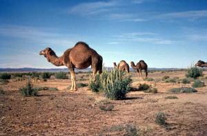 Agadir tours tata
