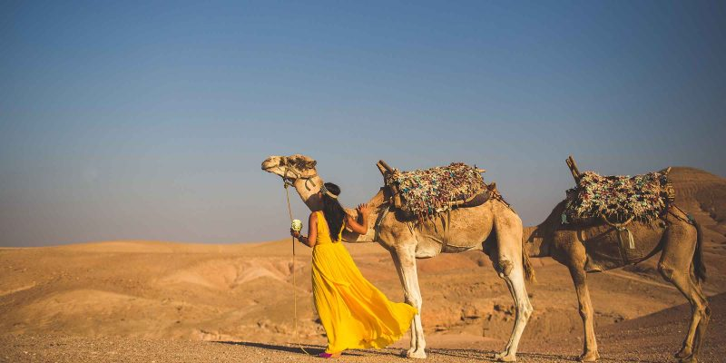 A-camels-at-awedding